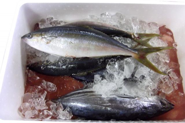 鮮魚 アジ 発泡スチロール 氷